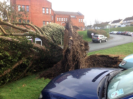 Fallen tree removed in Northamptonshire